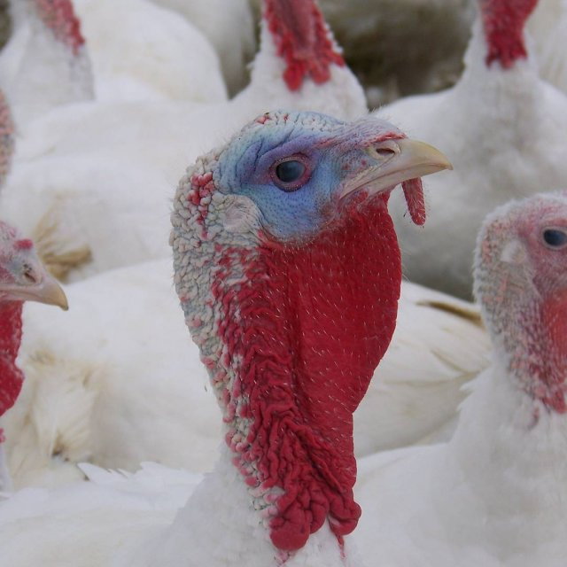 We are no longer taking preorders for turkeys We willhellip
