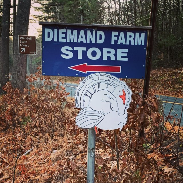 Don't delay—today's your last day! 🦃 . . . #diemandfarm #wendellma #farmstore #shoplocal #buylocal #eatlocal #pastureraised #turkeys #thanksgiving #familyfarm #westernma #franklincounty #pioneervalley #bealocalhero #othersidema #visitwesternma #igers413 #newengland_igers #igersmass #massachusetts_igers #navigatingnewengland #roadtripnewengland #massagriculture #farmtofork #farmtoplate #farmstyle #massgrown #stillfarming