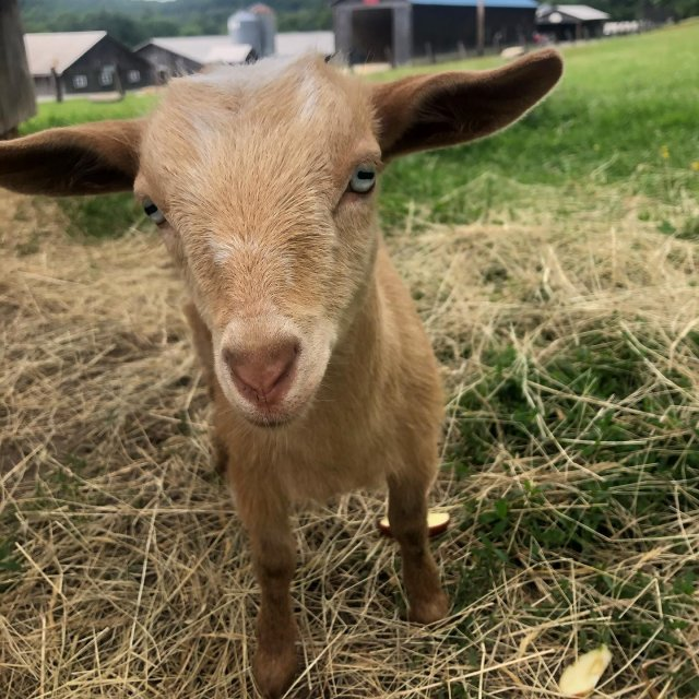 Let's hear a warm welcome for the newest members of our farm family, Honeycrisp and Pippin! @crooked_trail  . . . #diemandfarm #wendellma #familyfarm #westernma #franklincounty #pioneervalley #othersidema #visitwesternma #igers413 #newengland_igers #igersmass #massachusetts_igers