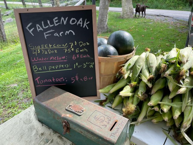 We've got a pop up market today with our friends at Fallen Oak Farm! Stop by for your fresh tomatoes, peppers, corn, and more. 🌽🍅 . . . #diemandfarm #wendellma #shoplocal #buylocal #familyfarm #westernma #franklincounty #pioneervalley #bealocalhero #othersidema #visitwesternma #igers413 #newengland_igers #igersmass #massachusetts_igers #selfserve #popupmarket #winstonthefarmdog #nofarmsnofarmdogs